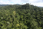 Selectively logged forest in Borneo -- sabah_aerial_1839