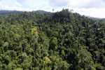 Selectively logged forest in Borneo -- sabah_aerial_1840