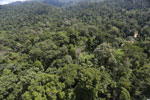 Borneo rainforest -- sabah_aerial_1848