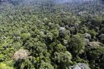 Borneo rainforest -- sabah_aerial_1849