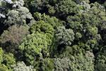 Borneo rainforest -- sabah_aerial_1859