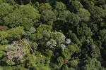 Borneo rainforest -- sabah_aerial_1868