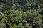 Borneo rainforest -- sabah_aerial_1869