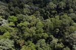 Borneo rainforest -- sabah_aerial_1870
