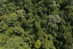 Borneo rainforest -- sabah_aerial_1871