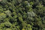 Borneo rainforest -- sabah_aerial_1872