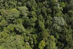 Borneo rainforest -- sabah_aerial_1873