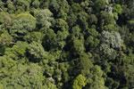 Borneo rainforest -- sabah_aerial_1874