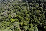 Borneo rainforest -- sabah_aerial_1875
