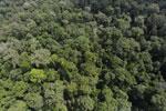 Borneo rainforest -- sabah_aerial_1876