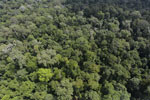 Borneo rainforest -- sabah_aerial_1877