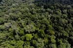 Borneo rainforest -- sabah_aerial_1878