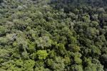 Borneo rainforest -- sabah_aerial_1879