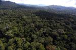 Borneo rainforest -- sabah_aerial_1883