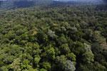 Borneo rainforest -- sabah_aerial_1885