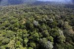 Borneo rainforest -- sabah_aerial_1886