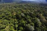 Borneo rainforest -- sabah_aerial_1887