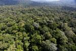 Borneo rainforest -- sabah_aerial_1888