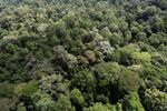 Borneo rainforest -- sabah_aerial_1891