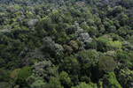 Borneo rainforest -- sabah_aerial_1892