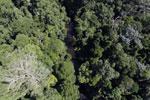 Imbak Canyon -- sabah_aerial_1980