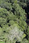 Imbak Canyon -- sabah_aerial_1981