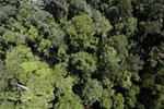 Imbak Canyon -- sabah_aerial_1985