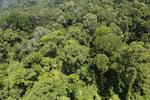 Imbak Canyon -- sabah_aerial_2068