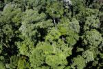 Imbak Canyon -- sabah_aerial_2076