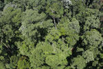 Imbak Canyon -- sabah_aerial_2077