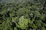 Imbak Canyon -- sabah_aerial_2084
