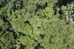 Imbak Canyon -- sabah_aerial_2088