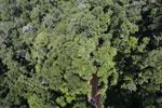 Imbak Canyon -- sabah_aerial_2089