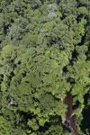 Imbak Canyon -- sabah_aerial_2090