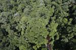 Imbak Canyon -- sabah_aerial_2091