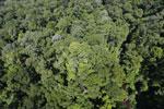 Imbak Canyon -- sabah_aerial_2092