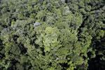 Imbak Canyon -- sabah_aerial_2093