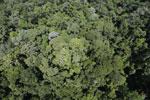 Imbak Canyon -- sabah_aerial_2096
