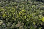 Imbak Canyon -- sabah_aerial_2181