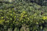 Imbak Canyon -- sabah_aerial_2185