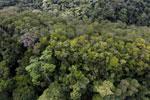 Imbak Canyon -- sabah_aerial_2190