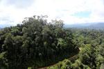 Logging road in Malaysia -- sabah_aerial_2235