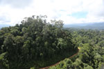 Logging road in Malaysia -- sabah_aerial_2236