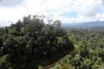 Logging road in Malaysia -- sabah_aerial_2238