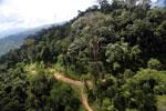 Logging road in Malaysia