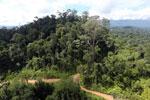 Logging road in Malaysia -- sabah_aerial_2243