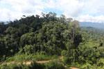 Logging road in Malaysia -- sabah_aerial_2244