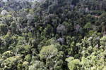 Selectively logged forest in Borneo -- sabah_aerial_2247