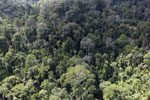 Selectively logged forest in Borneo -- sabah_aerial_2248