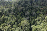 Selectively logged forest in Borneo -- sabah_aerial_2249
